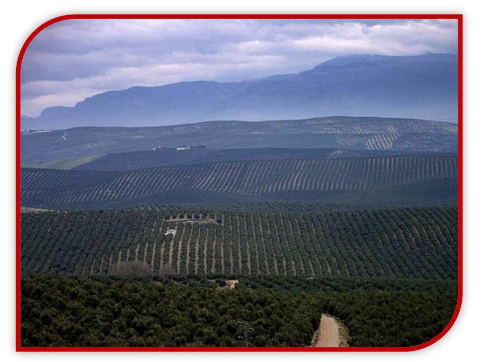 Diapositiva6 - La Leyenda: Irse por los Cerros de Ubeda