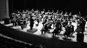 Orquesta Amadeus
