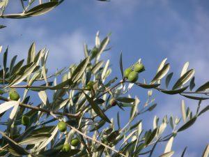 eb35b80d2df2053ecd0b4204e2445b97e77ee2d31ab516479c 1920 300x225 - Paisajes del olivar