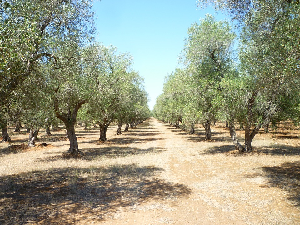 Oleoturismo cerca de Úbeda y Baeza