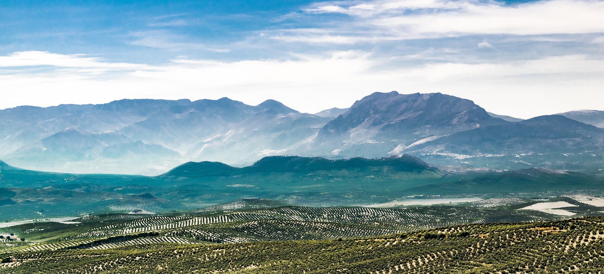 Turismo Ubeda y Baeza: mar de olivos